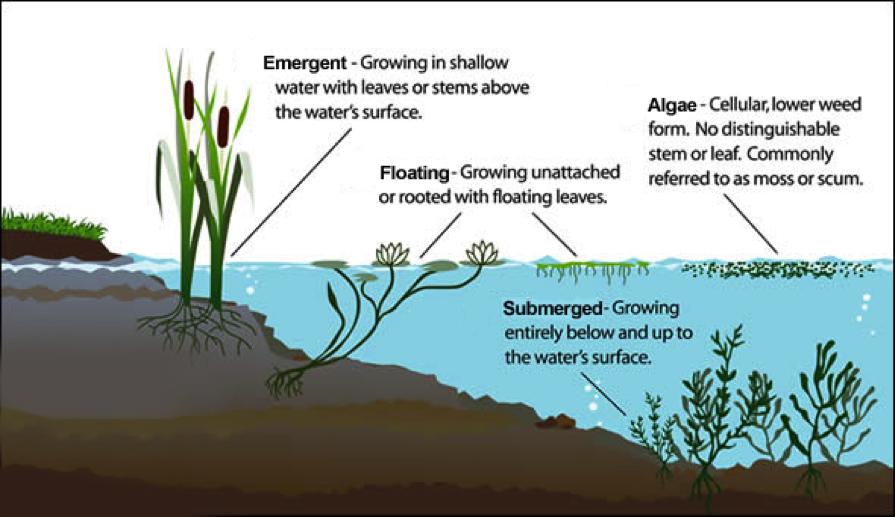 Aquatic Vegetation Control